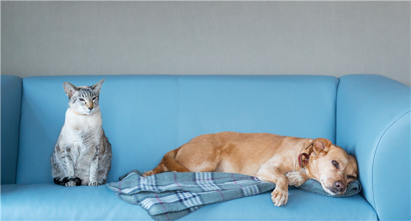 Getting Pet Odor Out of Upholstery and Rugs