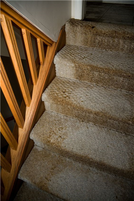 Whether Carriage Cleaners Can Salvage Your Carpet Or Not