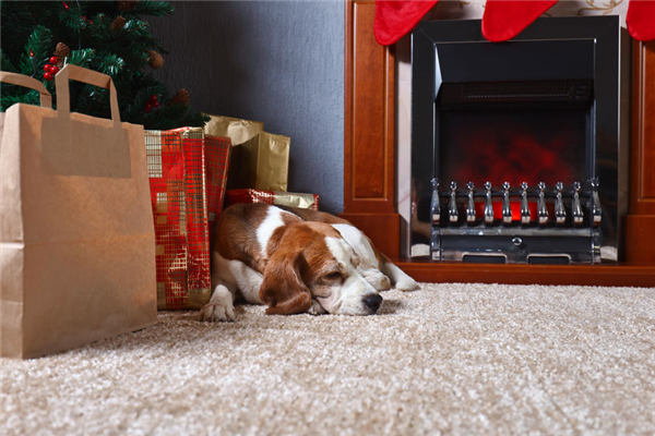 Reasons to Have Your Carpets Cleaned Before the Holidays