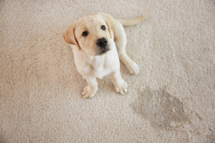 Tips for Removing Pet Odor from your Home