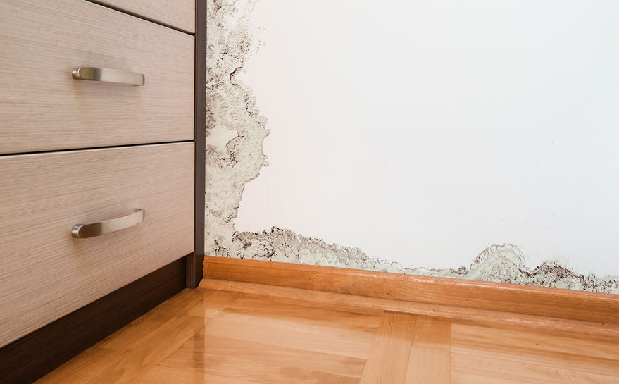 The Dangers of Water Damage