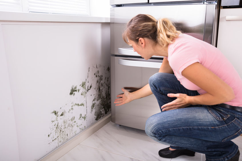 Mold in the Home? CCS Cleaning & Restoration Can Remove it